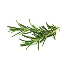 Rosemary Plant Pods