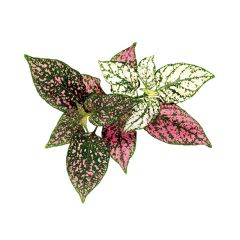 Polka Dot Flower Plant Pod