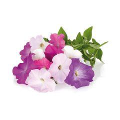Petunia Plant Pods