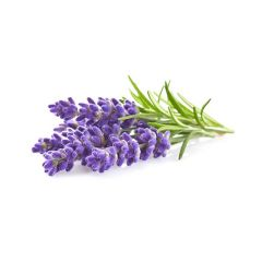 Lavender Plant Pods