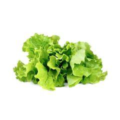 Green Lettuce Plant Pods